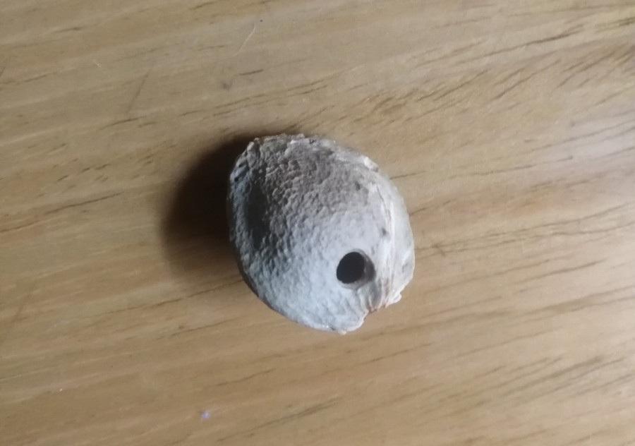 一枚杏核做的口哨