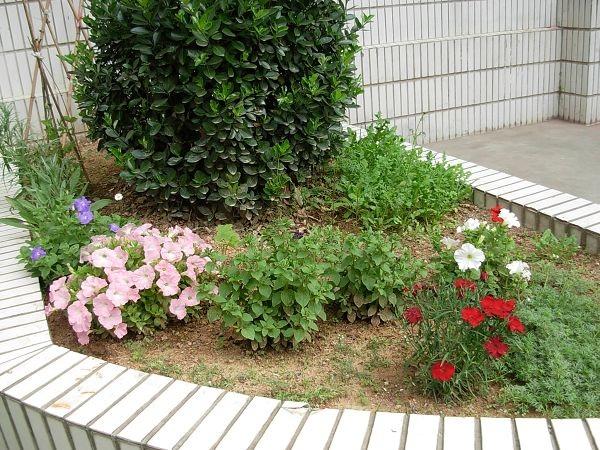 美丽的小花园