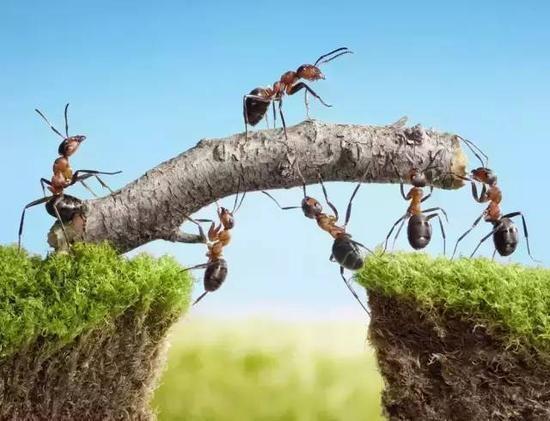 蚂蚁的启示