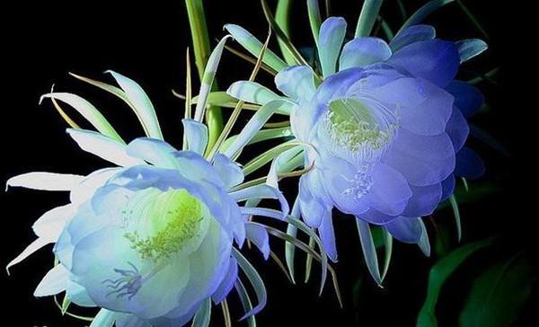 昙花怎么养才能开花?